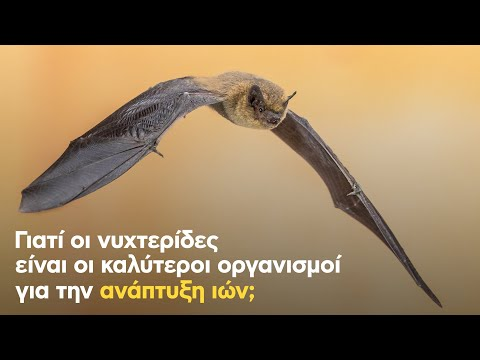 Γιατί οι νυχτερίδες είναι οι καλύτεροι οργανισμοί για την ανάπτυξη ...